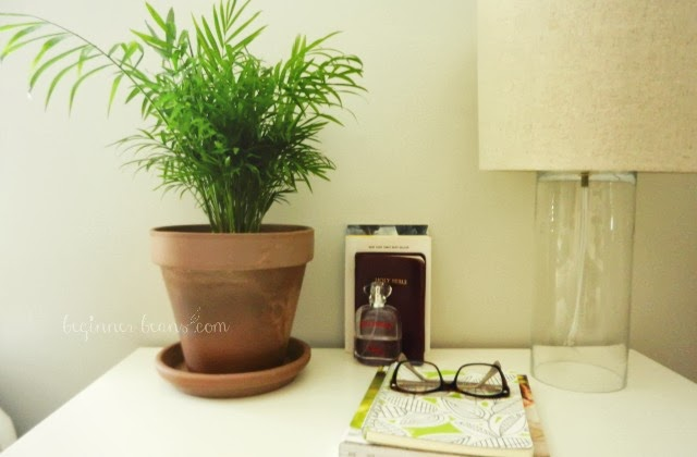 air-cleansing houseplant in the bedroom