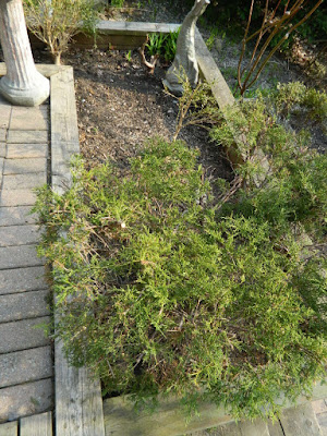 The Beach Toronto Front Garden Tier Eight Before by Paul Jung Gardening Services--a Toronto Gardening Company