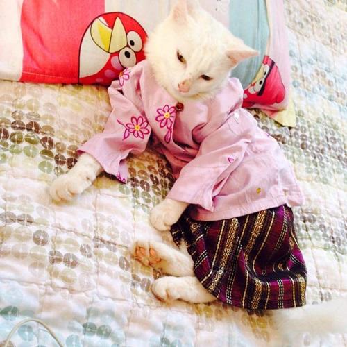 baju raya kucing, fesyen meletup kucing 2016, baju kurung raya untuk kucing, baju melayu kucing, songkok kucing