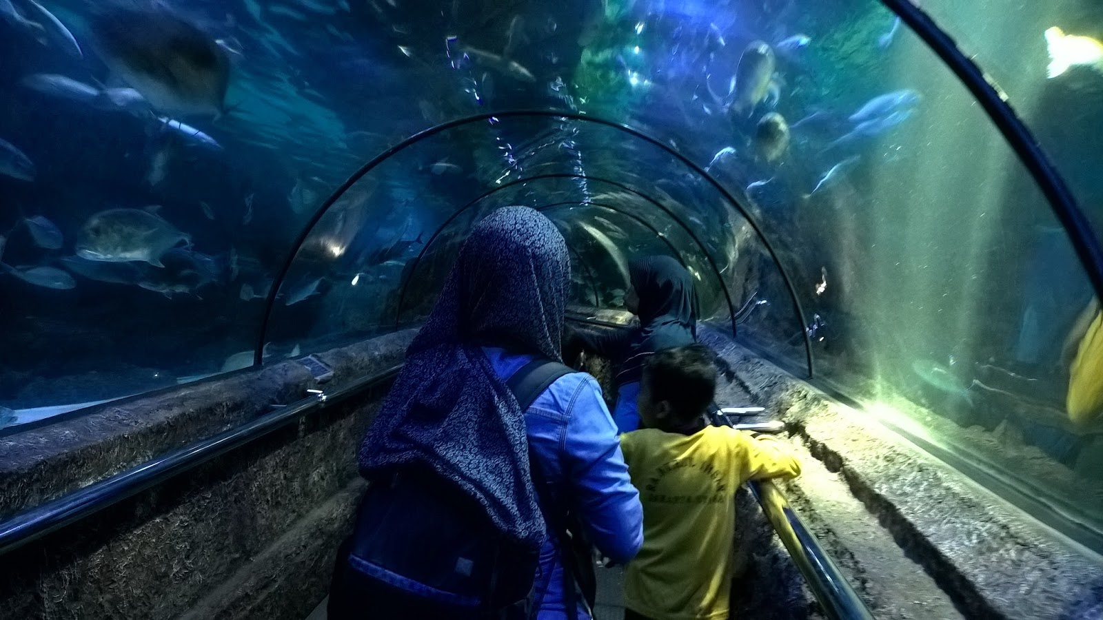 Sea World Ancol Tidak Menarik Lagi Djangkaru Bumi
