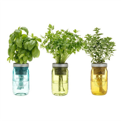Great gift idea for growing herbs indoors in mason jars.