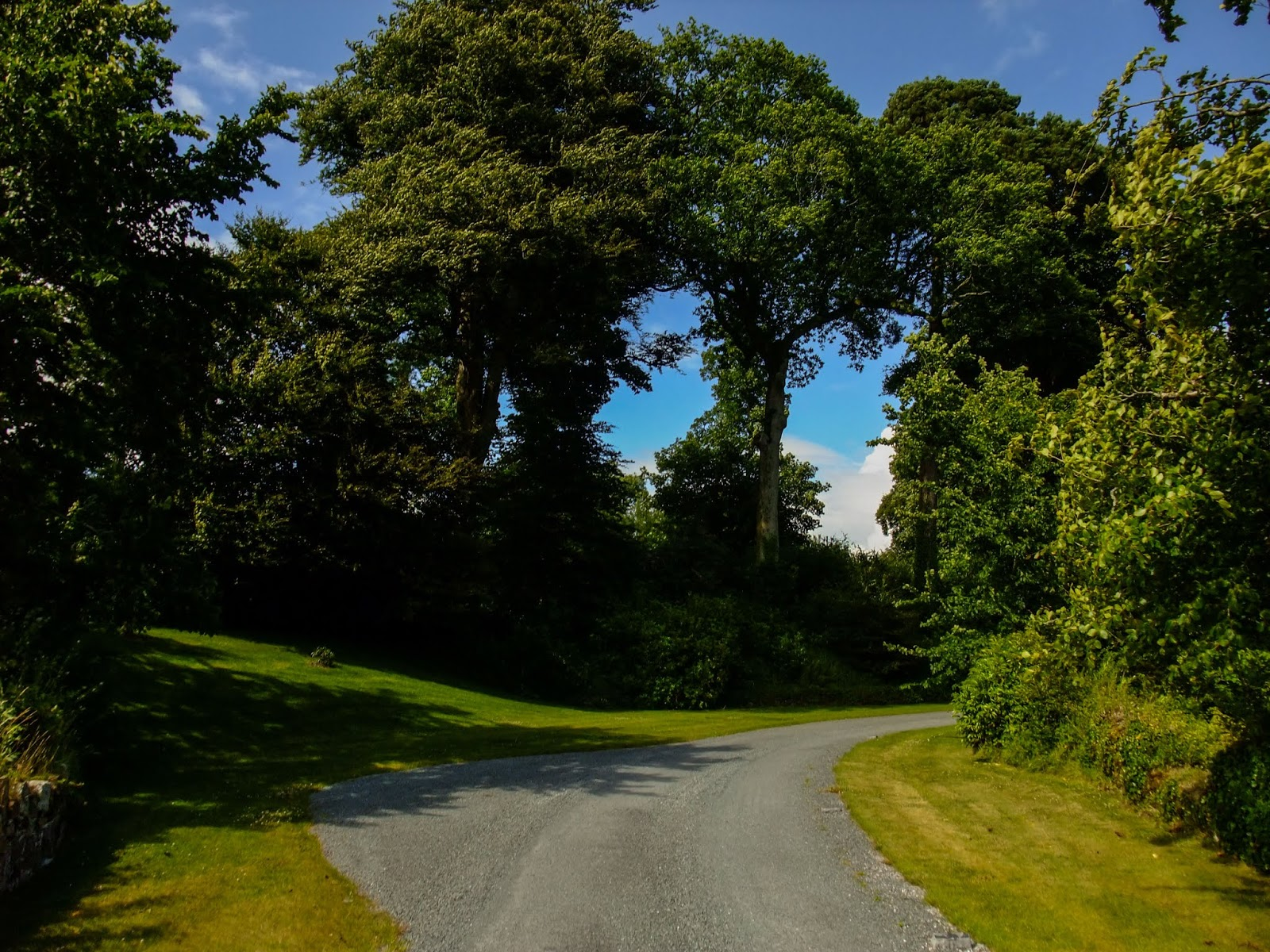 A gravel path between old trees in Co.Cork.