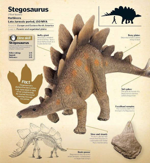 Stegosaurus ('Roof lizard')  Herbivore, Late Jurassic period, 150 MYA, Found in: Europe and Eastern North America, Lived in: Forests and vegetated plains. Brain power Stegosaurus was not a very smart dinosaur – it had a brain no larger than a dog's. Slow and steady Its short, stumpy legs meant that Stegosaurus could barely walk faster than a human being. Bony plates Stegosaurus had 17 plates along its back. Hefty giant Stegosaurus weighed about 5,000kg – that's about half as much as a double-decker bus. Tail spikes The spike at the end of a Stegosaurus's tail was called a thagomiser. Dino skill Stegosaurus had sharp 60-90cm-long tail spikes that it could swing at an attacker to defend itself. Stegosaurus Killer rating: 1/5, Speed: 1/5, Defence: 3/5.