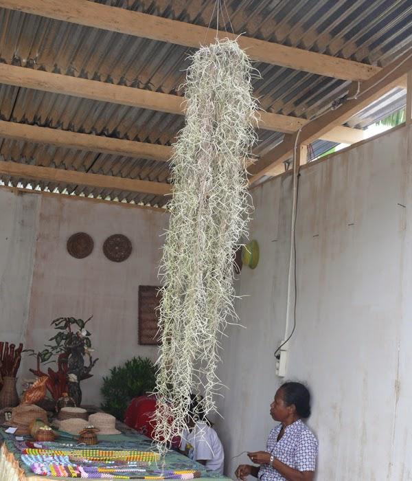 Image Result For Agen Pulsa Murah Di Biak Barat