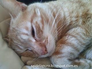cuidar-gatos-sin-madre