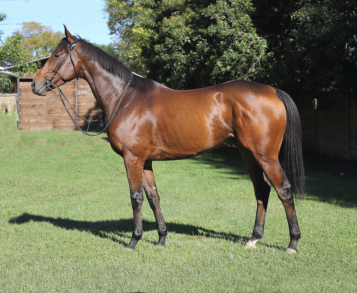 Dark Moon Rising - Horse Profile - Breeder: Dr I R Heyns - Sire: Ideal World (USA) - Dam: Full Moon Rising by Second Empire (IRE)