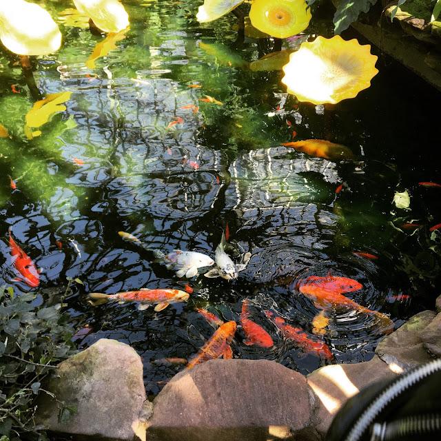 Koi Pond Garfield Conservatory