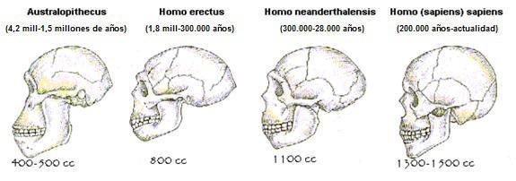 Evolución de cerebro de homínidos cazadores.