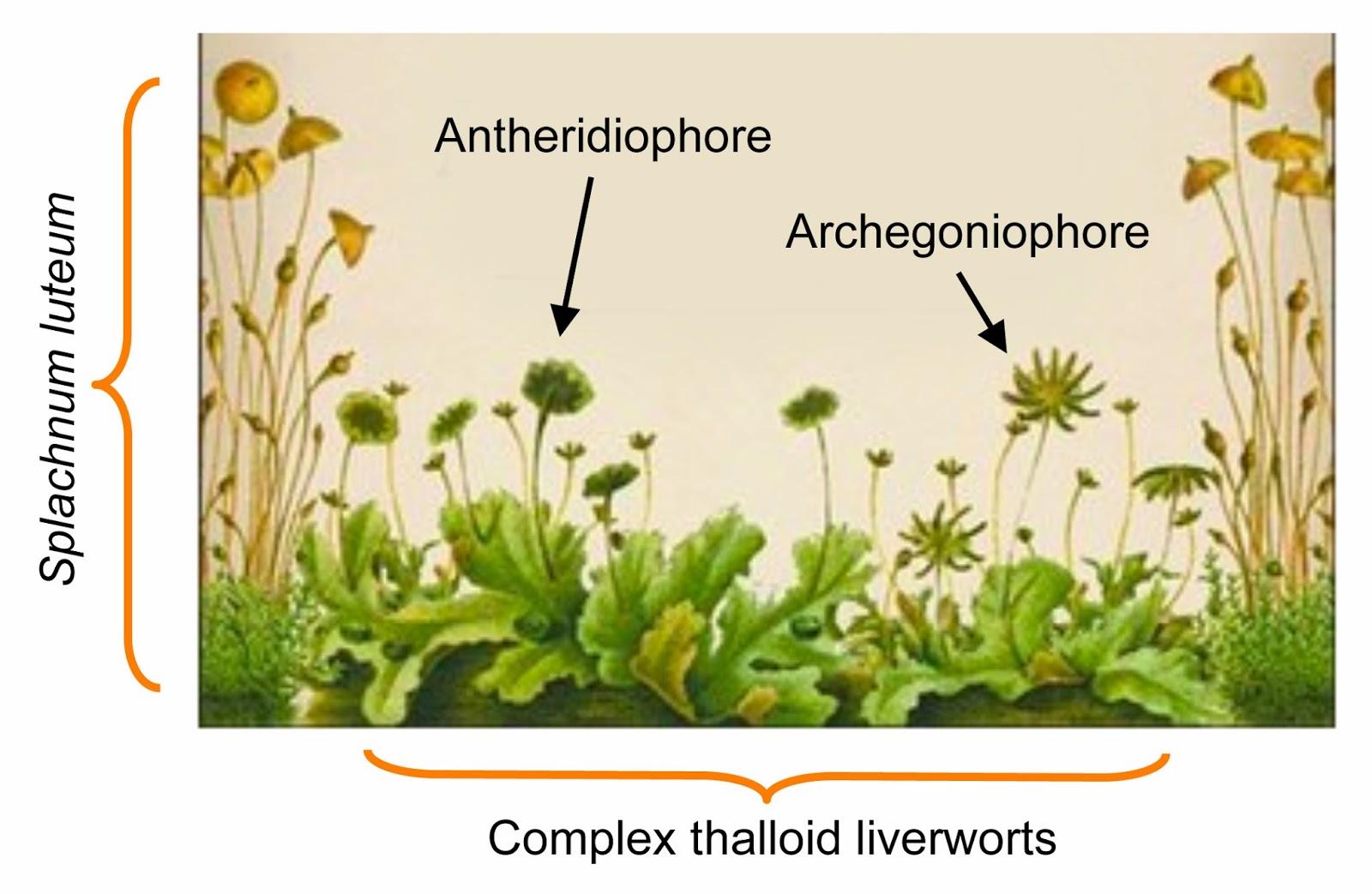 Moss Diagram Labeled Evinrude 115 V4 Wiring Liverwort Imagenesmy