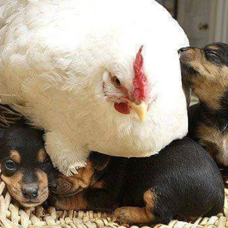29 Heartwarming Images Of Cute Animals Depict What It's Like Being A Mom