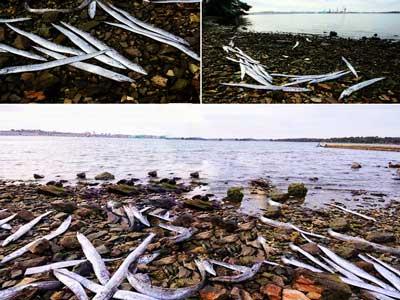Peces mueren en Croacia