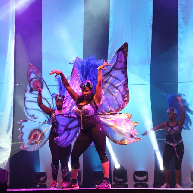 caribean butterflies