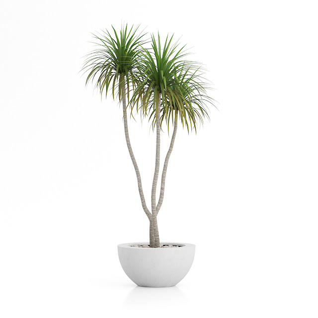 3D model free -  Plants_01