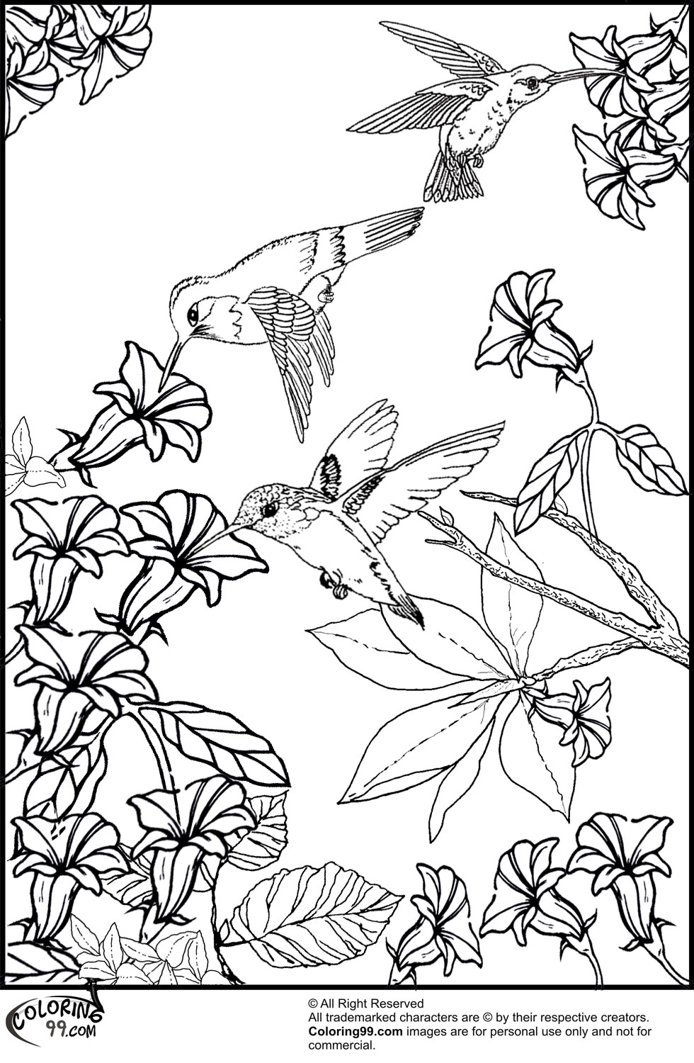 Hummingbird Coloring Pages Team colors
