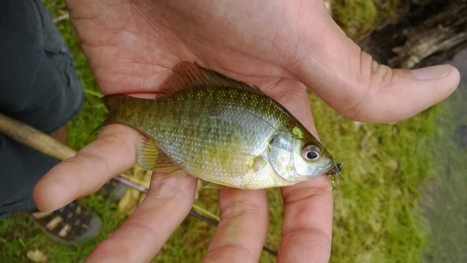 Keep Calm and Fly Fish: Paradise Lake & Horseshoe Lake, The