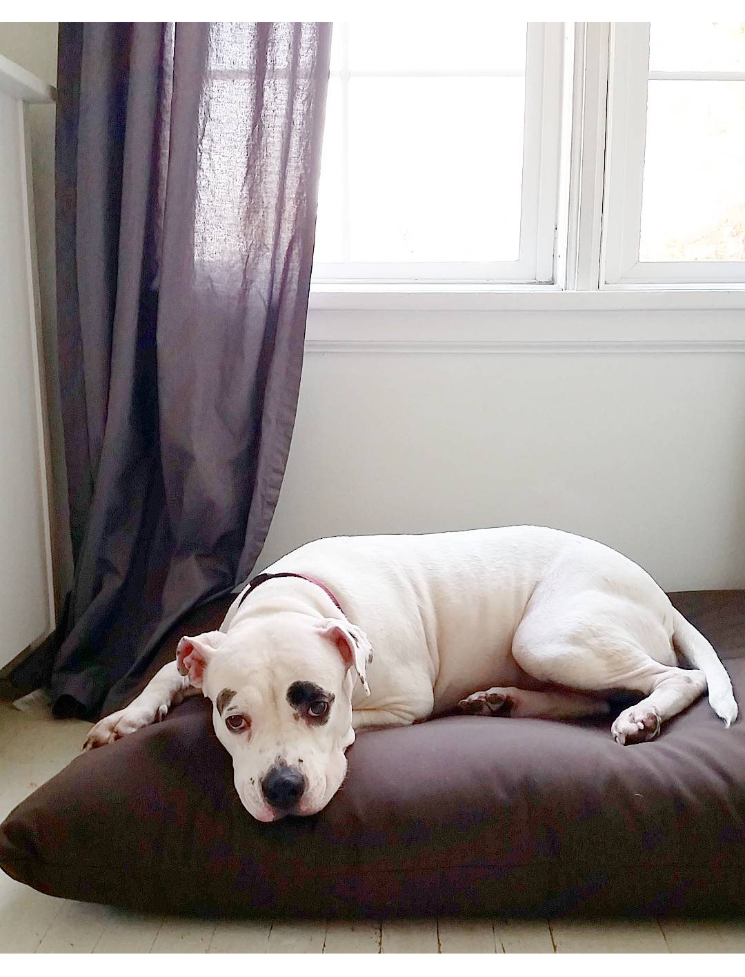 taking a stand and choosing wellness over all is imperative for healthy living  i am a huge fan of the futon shop their products and their mission     little island studios  the futon shop natural dog bed giveaway   rh   littleislandstudios blogspot