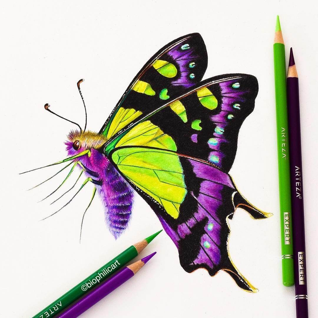 08-Macleay-Butterfly-Sallyann-Brightly-Colored-Animal-Pencil-Drawings-www-designstack-co