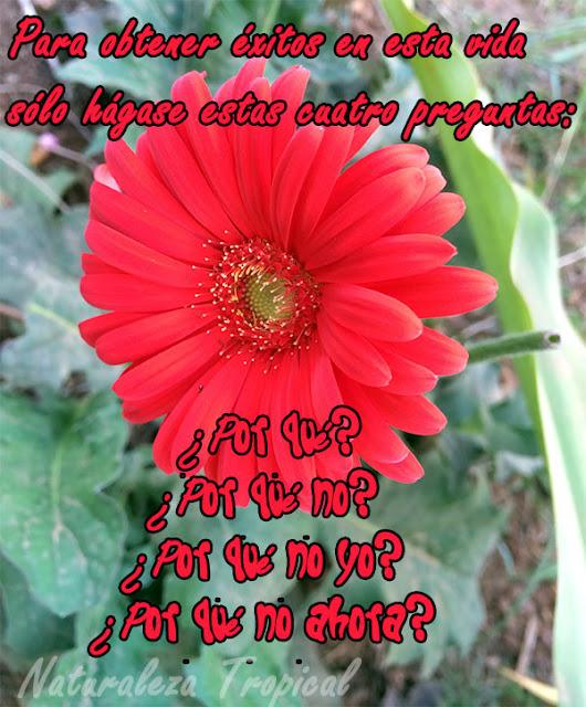 Para obtener éxitos en esta vida sólo hágase estas cuatro preguntas: ¿Por qué? ¿Por qué no? ¿Por qué no yo? ¿Por qué no ahora?