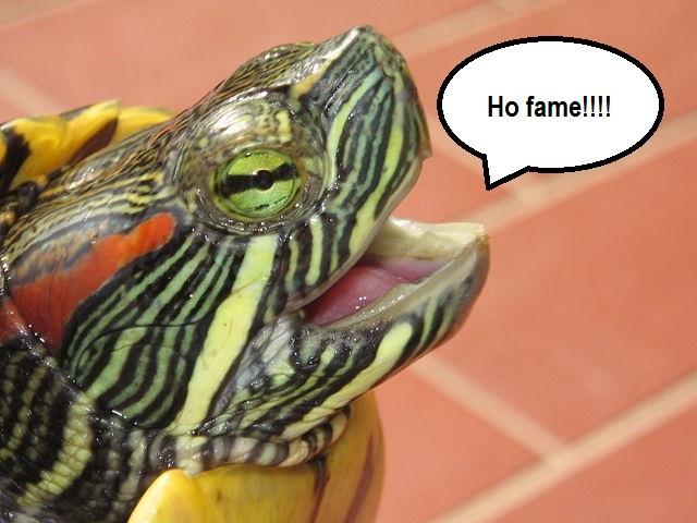 Mondo dei rettili cosa mangiano le tartarughe acquatiche for Acqua tartarughe