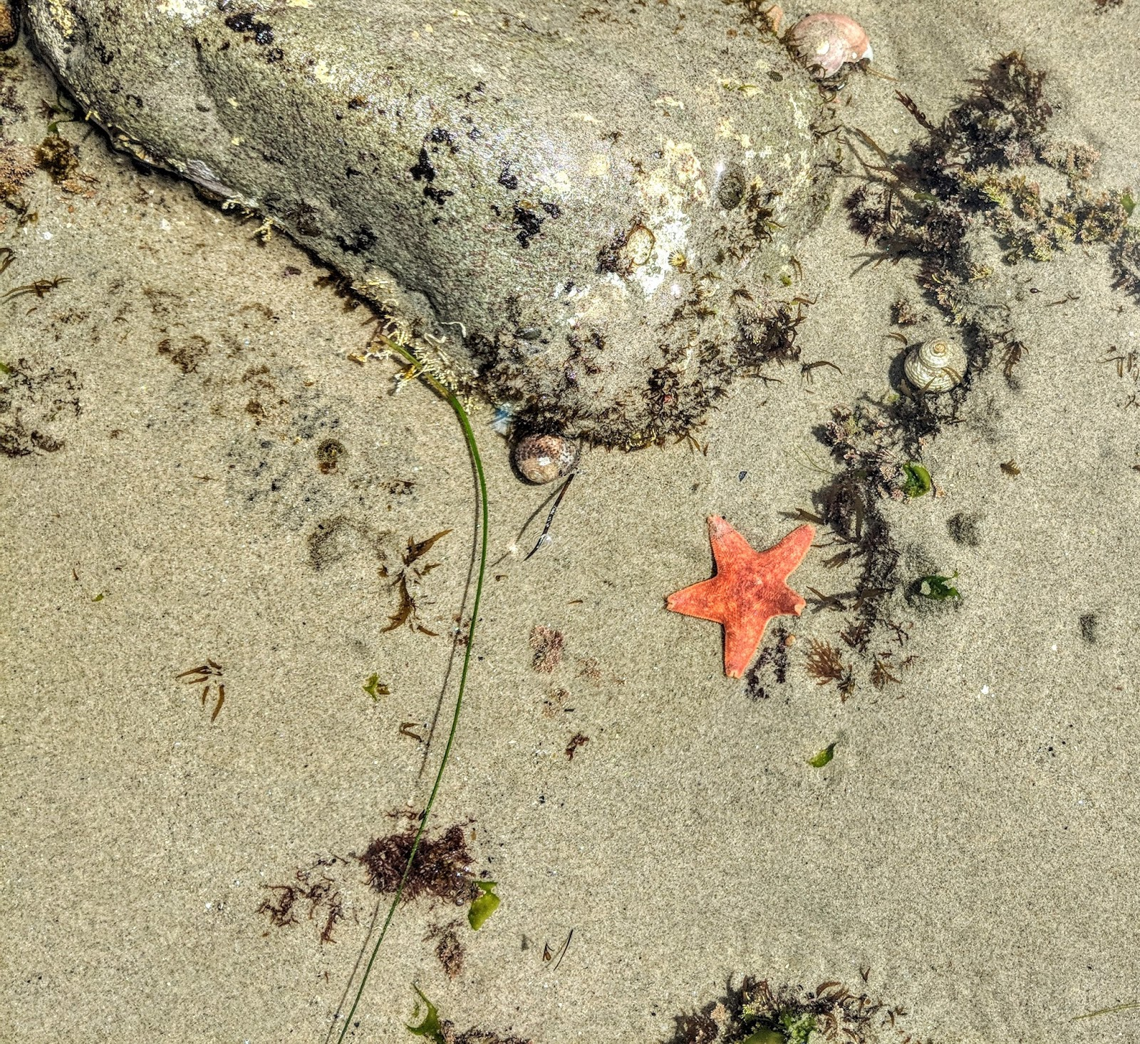 Bright orange starfish from pacific ocean at topanga beach in malibu california los angeles sealife saltlife hermit crab ocean beach coast crab hunting blogger travel blog