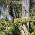 【斐濟】住宿/The Beachouse・在美麗的珊瑚海岸放空