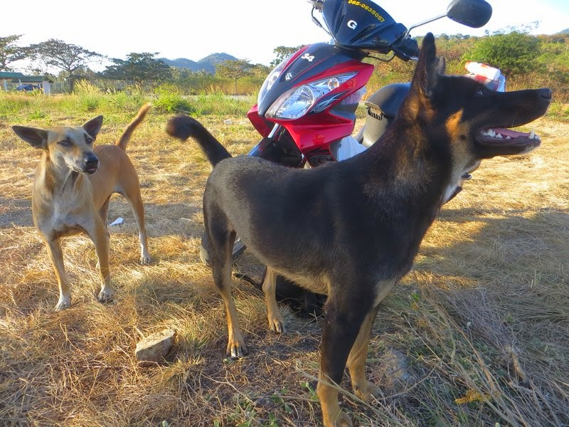 Собаки и скутер