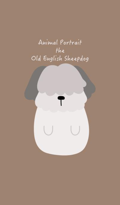 Animal Portrait - Old English Sheepdog