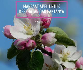 pohon apel yang sedang berbunga