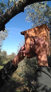 Cajas nido lucha biológica
