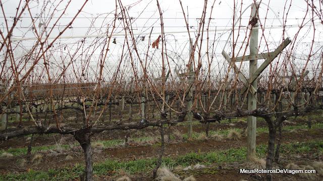 Vinhedos da vinícola Villa Francioni - São Joaquim/SC