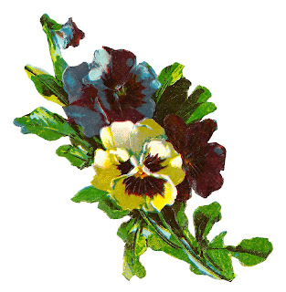 pansy flower image artwork botanical illustration clipart