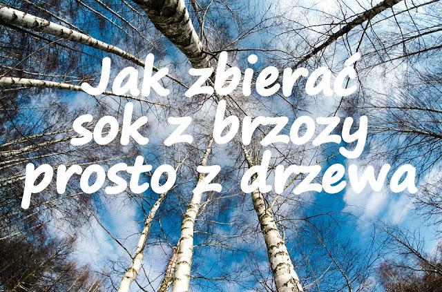 https://zielonekoktajle.blogspot.com/2018/04/jak-zbierac-sok-z-brzozy-prosto-z.html