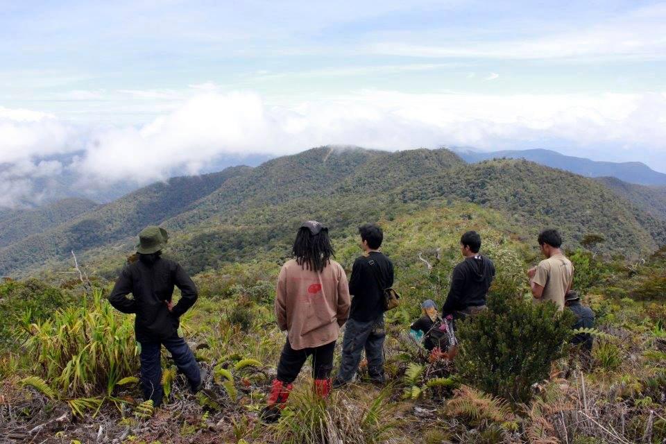 gunung leuser orangutan tour gunung leuser national park orangutans