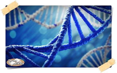 DNA, Apa itu DNA, Pengertian DNA, Struktur DNA, Penjelasan tentang DNA