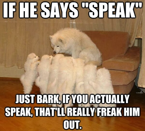 Funny clean dog memes - photo#44