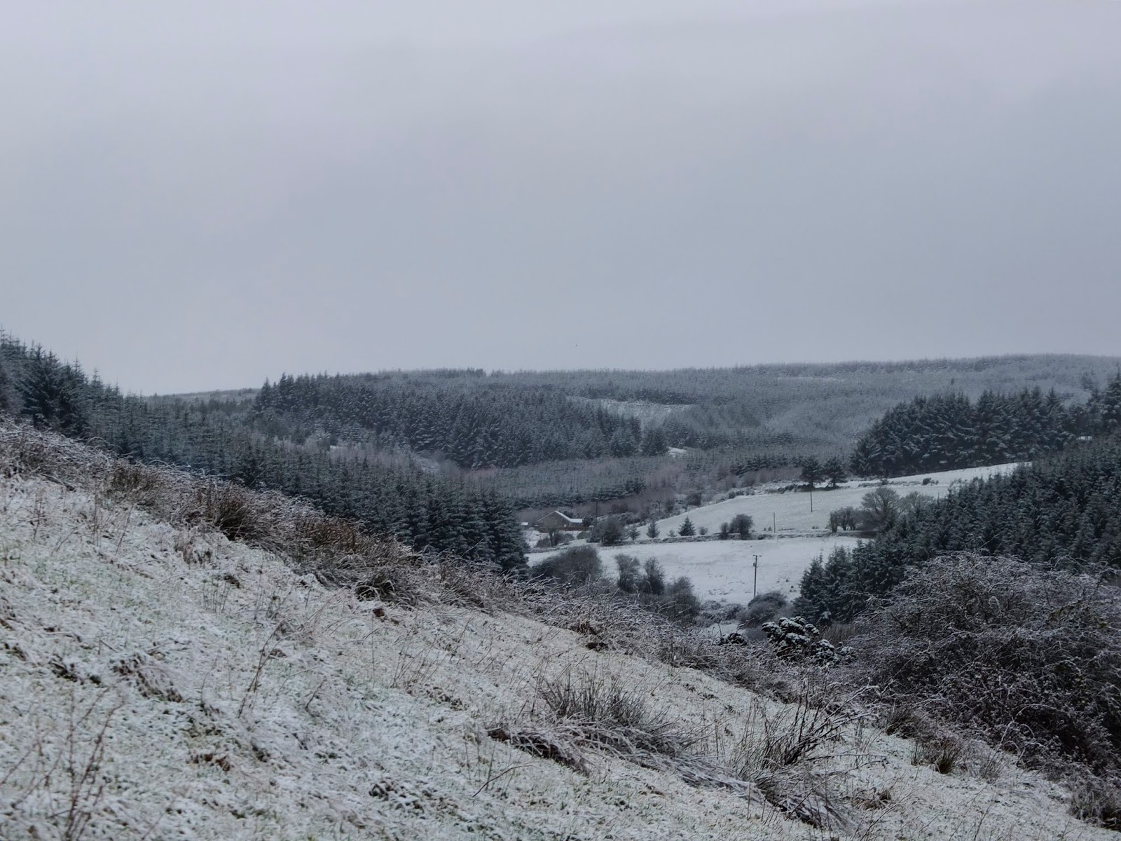 Snow capped forestry in the Boggeragh Mountains in North Cork.