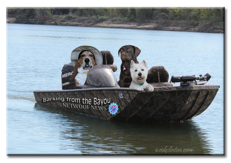 Basset, Westie and Lab in camouflage boat on the lake.