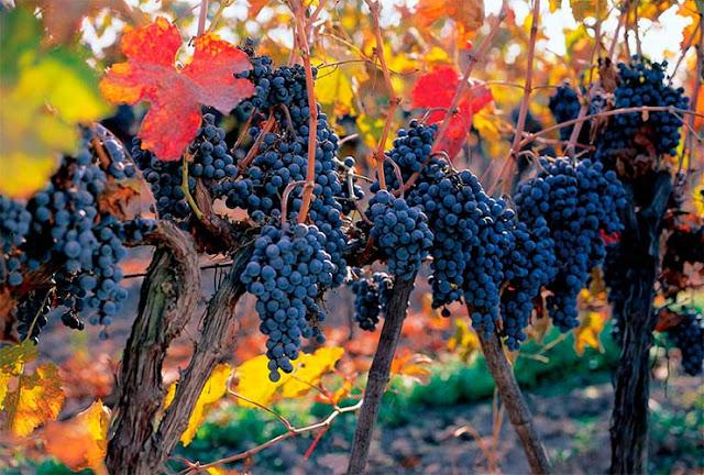 Visitar as vinícolas em Santiago no mês de fevereiro