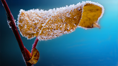 Frosted Leaf HD