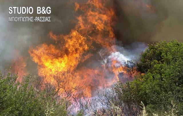 Αργολίδα: Πυρκαγιά στο Ελληνικό του Δήμου Άργους Μυκηνων