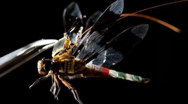 dragon%2Bfly%2Bdrone