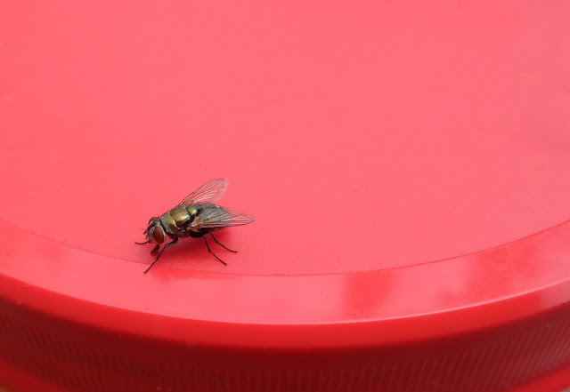 Fly on the lid to a compost jar