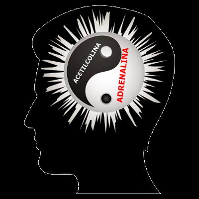 yin-yang-en-el-cerebo