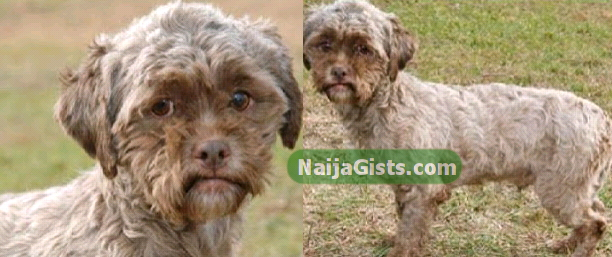 Dog With Human Face Rescued In US (Photo)NaijaGistsBlog ...