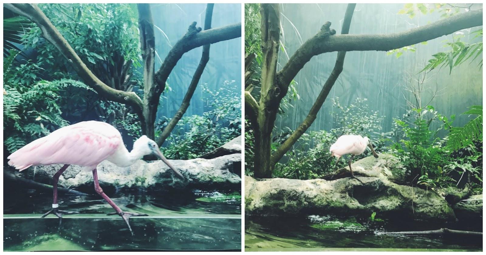 florida aquarium7