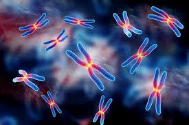 Saiba mais sobre a Citogenética e importância para humanos