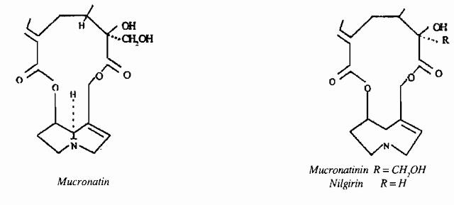 Thành phần hóa học Lục lạc ba lá tròn - Crotalaria mucronata - THÔNG TIỂU TIỆN VÀ THÔNG MẬT