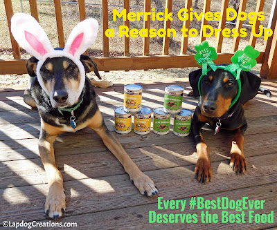 Teutul & Penny are all dressed up for #Merrick seasonal recipes #dogfood #BestDogEver #dobermanpuppy #seniordog #adoptdontshop #rescueddogs #LapdogCreations ©LapdogCreations
