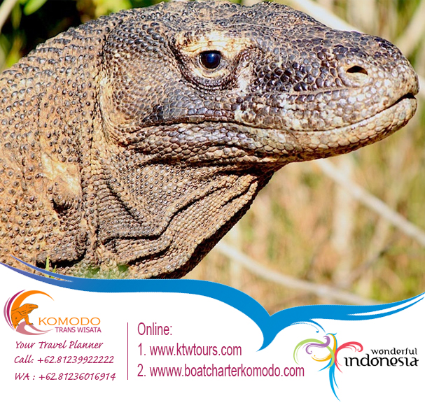 https://www.boatcharterkomodo.com/tour-packages