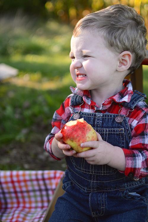 Apple picking | My Darling Days